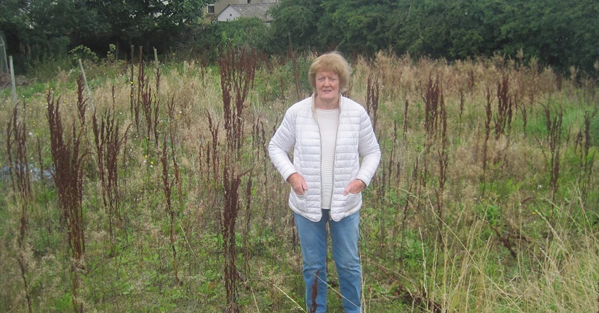Allotments may get new lease of life